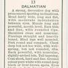 Dalmatian.