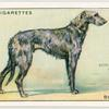 Deerhound.