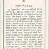 Pekingese.