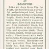 Samoyed.