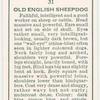 Old English Sheepdog.