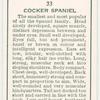 Cocker Spaniel.