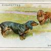 Dachshunds.