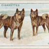 Elkhounds.