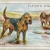 Otterhounds.