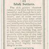 Irish Setters.