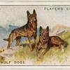 Alsatian Wolf Dogs.