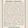 Clumber Spaniels.