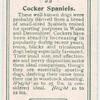 Cocker Spaniels.