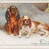 King Charles Spaniels.