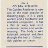 Golden Retriever.