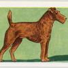 Irish Terrier.