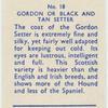 Gordon or Black and Tan Setter.