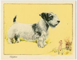 The Sealyham Terrier.