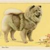 The Chow-Chow.