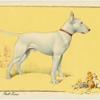 The Bull Terrier.