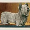 The Skye Terrier.