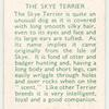 The Skye Terrier.