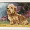 The Dandie Dinmont Terrier.