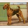 The Airedale.