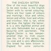 The English Setter.