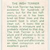 The Irish Terrier.