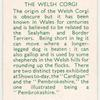 The Welsh Corgi.