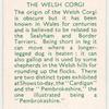 The Welsh Corgi.