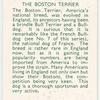The Boston Terrier.