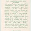 The Staffordshire Bull Terrier.