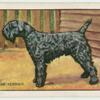 The Kerry Blue Terrier.