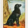 Flat-coated Retriever.