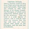 Tibetan Spaniel.