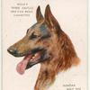 Alsatian Wolf Dog.