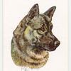 Elkhound.