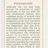 Foxhound.