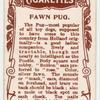 Fawn Pug.