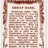 Great Dane.