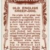 Old English Sheep-dog.