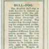 Bull-dog.