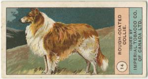 Rough-coated Collie. Digital ID: 1523531. New York Public Library