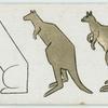 The kangaroo.