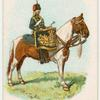 Drum horse of the Queen's Own Hussars.