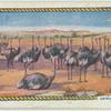 Ostrich farming.