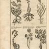 Typus nonnullarum Herbarum.