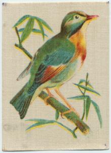 Pekin Robin.