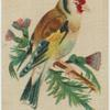 Common Goldfinch.