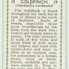 Goldfinch (Carduelis carduelis).