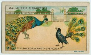 The jackdaw and the peacock.