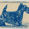 Scottish Terrier.